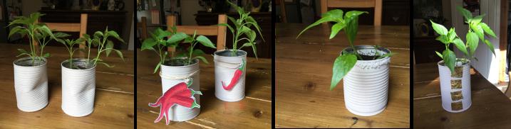 Make Kitchen Planters