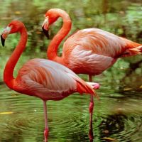 Happy Pink Flamingo Day !