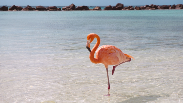 flamingo-standing.ngsversion.1396530994611