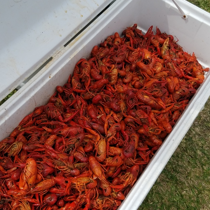 How to Boil Crawfish *