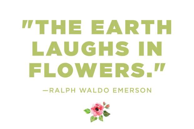 flowers-quotes-1