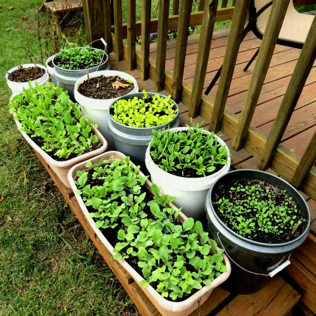 backyard-the-rusted-vegetable-garden-img-container-seeds-gardening-vegetables-for-beginners-and-flowers-self-watering-plants-gardens-ideas-in