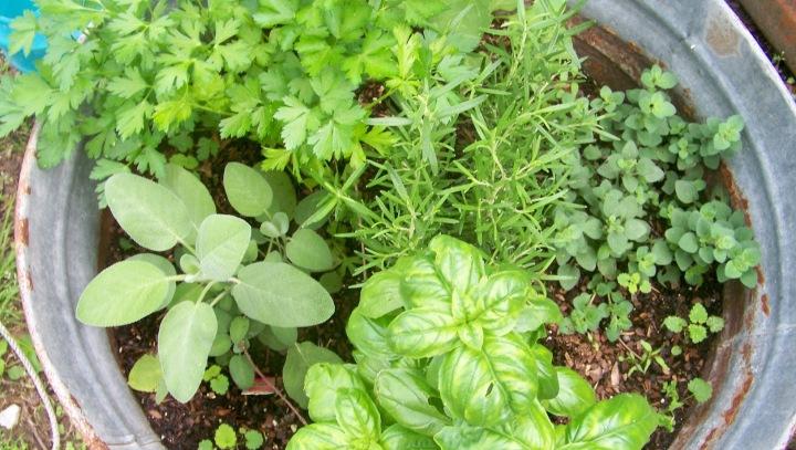 Herb Day