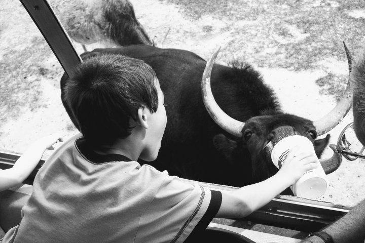 Black and White *Horn