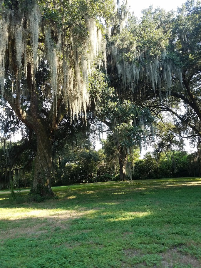 Thursday Tree Love : Live Oaks