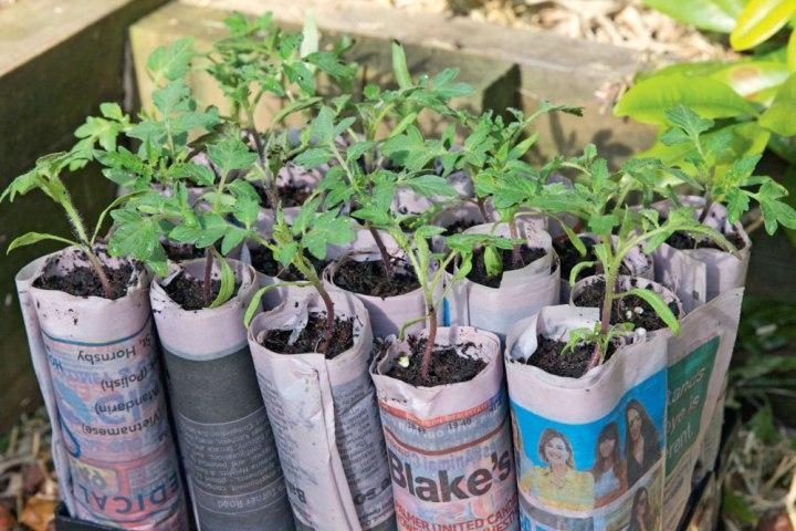 Garden time : PlantingSeeds