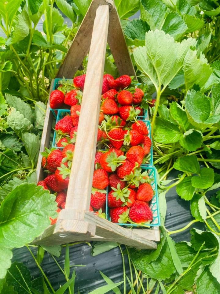 Louisiana Strawberries