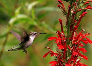 In the Garden :Birds