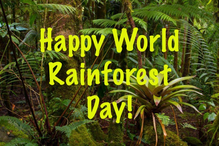 Lisa Kids Club : RainforestDay