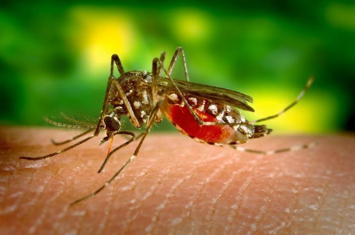Buzz   Off :Mosquitos