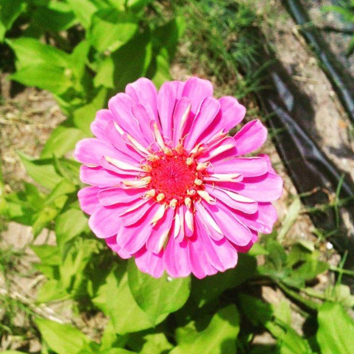 Shades of Pink; Becky's October Past SquaresChallenge